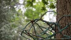 Expo-parcours : Le dialogue subtil de l'art contemporain et de la nature au Domaine de Chaumont-sur-Loire